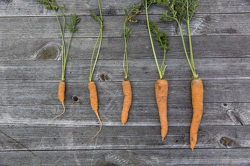 vegetables-1666632__340
